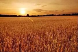 【转】收麦~儿时的记忆扑面而来!